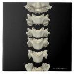 Las vértebras cervicales 7 azulejos cerámicos