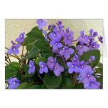 Las violetas azules más azules tarjetas