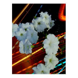 laser flower postcard