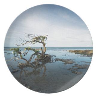 Last Mangrove Standing Melamine Plate