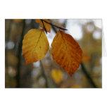 last of autumn colours card