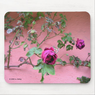Last Rose of Summer Mouse Pad