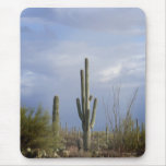 Late Afternoon in the Desert Mouse Pad