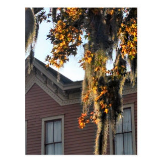late afternoon light on leaves in Savannah, GA, US Postcard