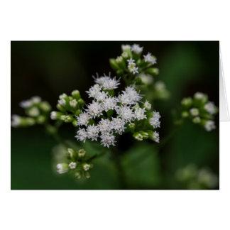 Late-flowering Boneset White Wildflower Card