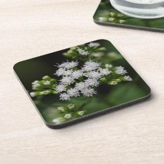 Late-flowering Boneset White Wildflower Coasters