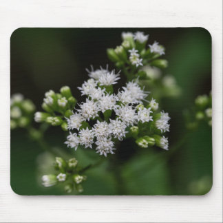 Late-flowering Boneset White Wildflower Mousepad