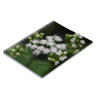 Late-flowering Boneset White Wildflower Notebook