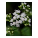 Late-flowering