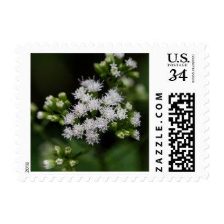 Late-flowering Boneset White Wildflower Stamps