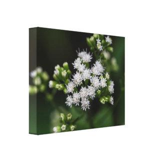 Late-flowering Boneset Wildflower Canvas Print