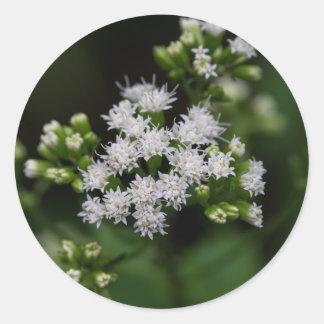 Late-flowering Boneset Wildflower Round Stickers