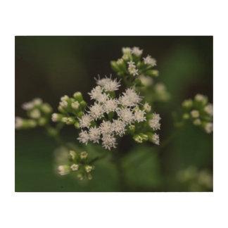 Late-flowering Boneset Wildflower Wood Wall Art
