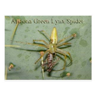 Late Night Driveway Car Wash (Lynx Spider) Postcard