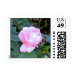 Late Summer Bloom Postage Stamp