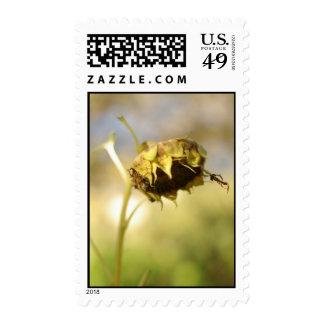Late summer sunflower stamp