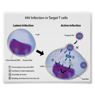 Latent and Active infection by HIV poster