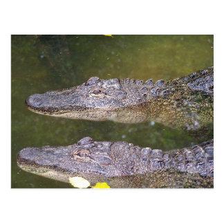 Later Gator Postcard