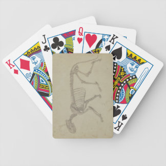 Lateral View of a Tiger Skeleton, finished study f Bicycle Playing Cards