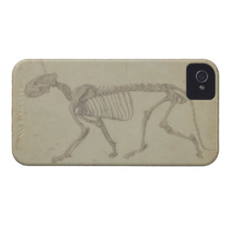 Lateral View of a Tiger Skeleton, finished study f iPhone 4 Cases