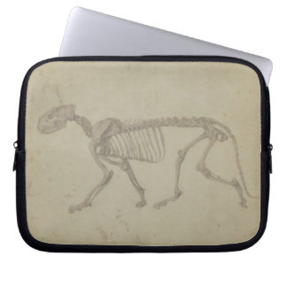 Lateral View of a Tiger Skeleton, finished study f Laptop Sleeve