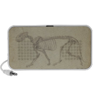 Lateral View of a Tiger Skeleton, finished study f Mini Speaker