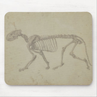 Lateral View of a Tiger Skeleton, finished study f Mouse Pad
