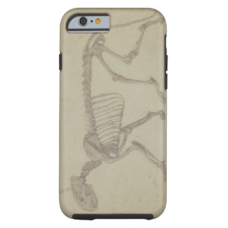 Lateral View of a Tiger Skeleton, finished study f Tough iPhone 6 Case
