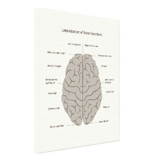 Lateralization of brain functions stretched canvas