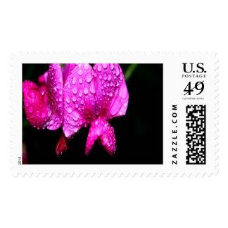 Lathyrus Large Postage Stamp