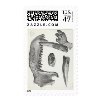Latidens de XLIX Coryphodon Timbres Postales