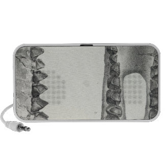 Latidens de XLVIII Coryphodon iPod Altavoces