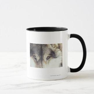 Latin name: Canis Lupus Mug