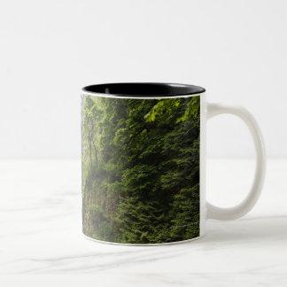Latourell Falls & Bridge Columbia River Gorge Two-Tone Coffee Mug