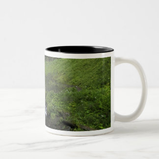 Latourell Falls, Columbia River Gorge, Oregon, Two-Tone Coffee Mug