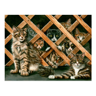 Lattice Cats Postcard