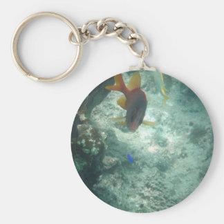 Latticework Soldierfish (Myripristis violacea) Basic Round Button Keychain
