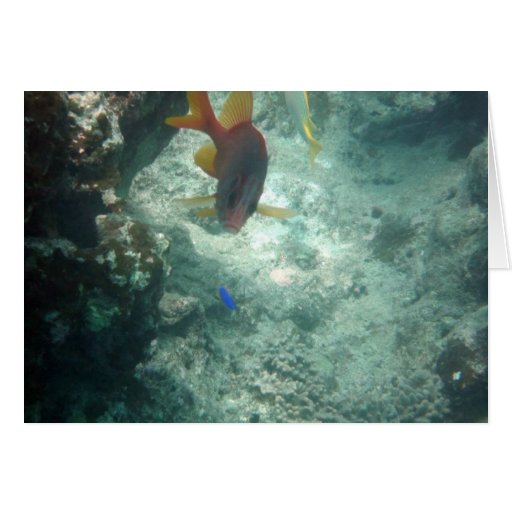 Latticework Soldierfish (Myripristis violacea) Greeting Card