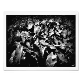 """Lau Lau (""""muchas hojas"""") Fotografía"""