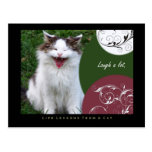 Laugh Life Lessons From a Cat Postcard