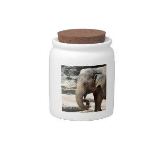 Laughing Asian Elephant Zoo wildlife Candy Jars