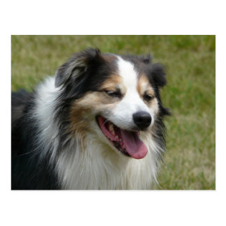 Laughing Aussie  Dog Post Cards