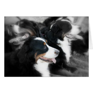 Laughing Berner Note Cards