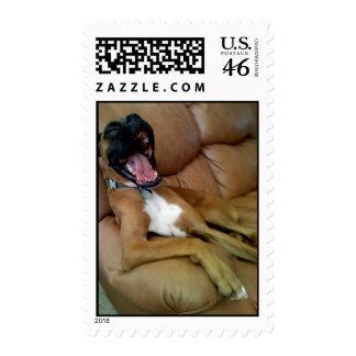 Laughing Boxer stamp