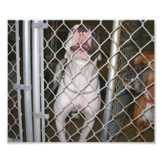 Laughing Bulldog inside a Cage Photo Print