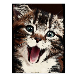 Laughing Cat Postcard