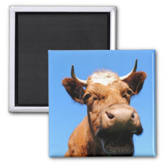 Laughing cow 2 inch square magnet