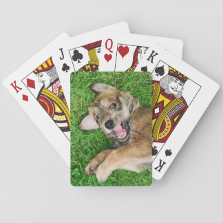 Laughing Dog Berger Picard Puppy, Playing Playing Cards