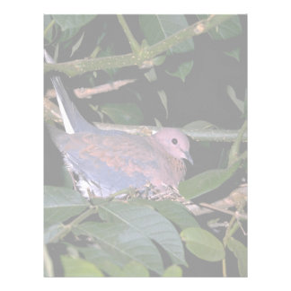 Laughing Dove Letterhead