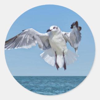 Laughing Gull Bird Sticker